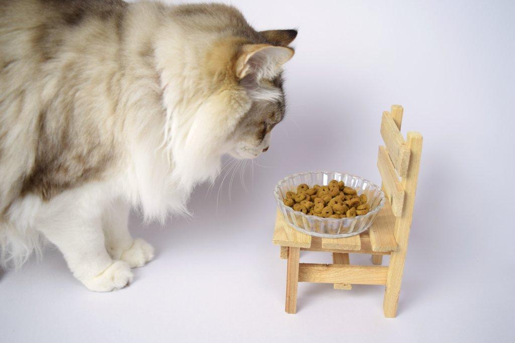 猫 パウチ おすすめ
