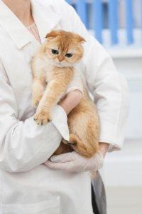 猫 抱っこ 克服