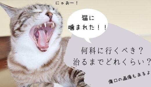 猫に噛まれた 何科 どれくらいで治る 治療法