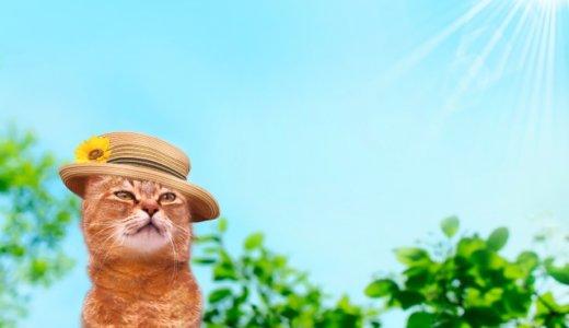 猫 夏 熱中症