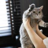 猫 抱っこ 克服法