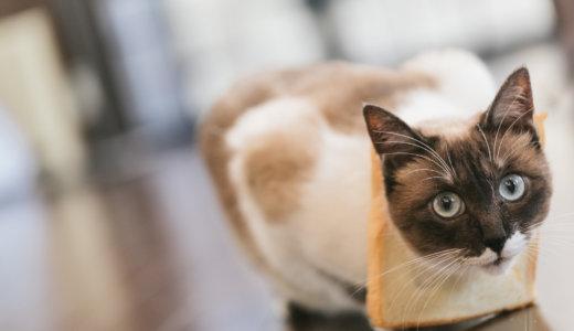 猫の便秘解消法!症状・原因は?ビオフェルミンは与えていいの?