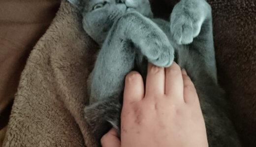 猫に噛まれた 傷 腫れ 治療