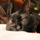 黒猫 大人しい 性格