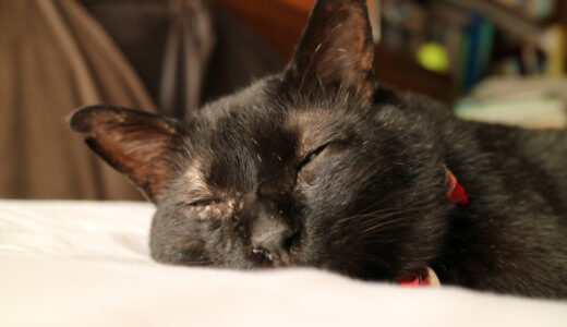 オスの黒猫の性格は甘えん坊?実際に飼ってみて思う黒猫の9つの魅力