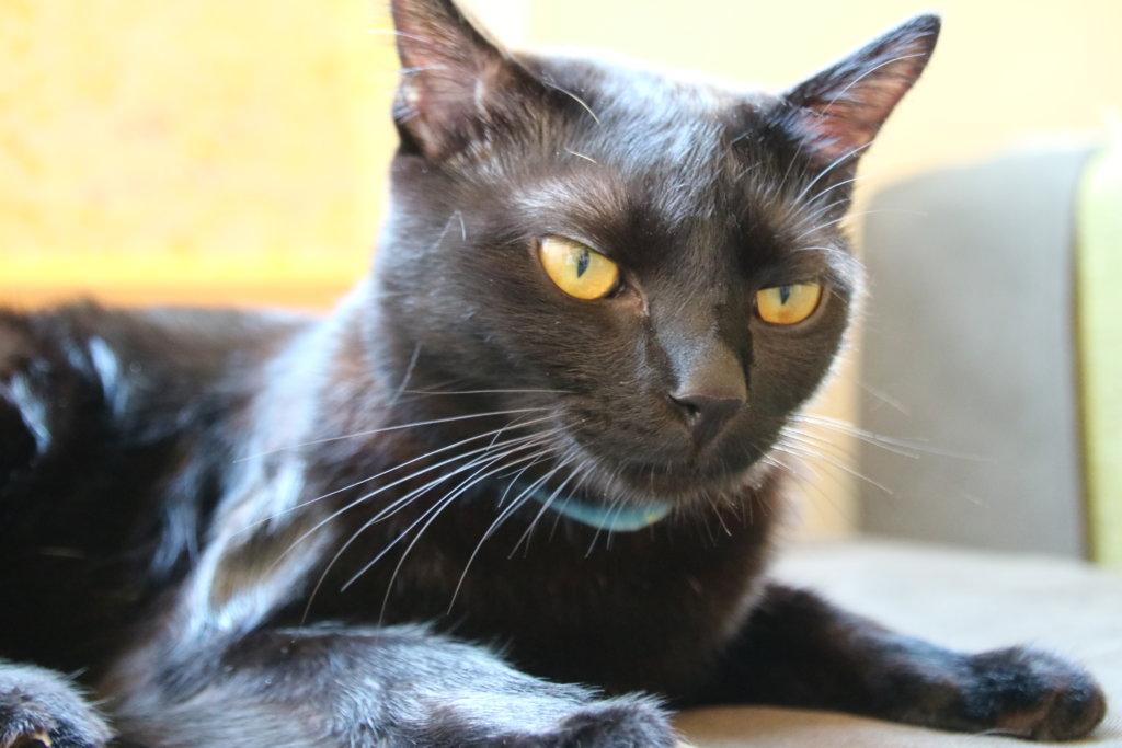 黒猫カフェ 姫路 おススメ