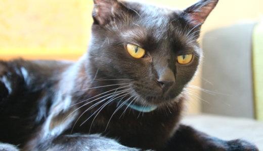 【世界初⁉】姫路駅から徒歩圏内の黒猫専門猫カフェが超絶おススメな件