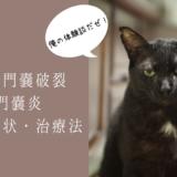 猫 肛門嚢破裂 肛門嚢炎 治療 自然治癒