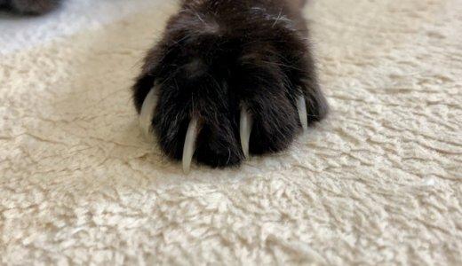 【朗報】爪切りを嫌がる猫ちゃんにおすすめの切り方とコツ教えます!