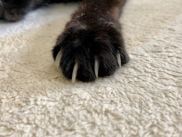 爪切り 猫 苦手