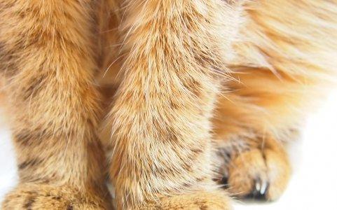 【猫の利き手を調べてみた】猫は利き手で性格が違うの?調べ方大公開!