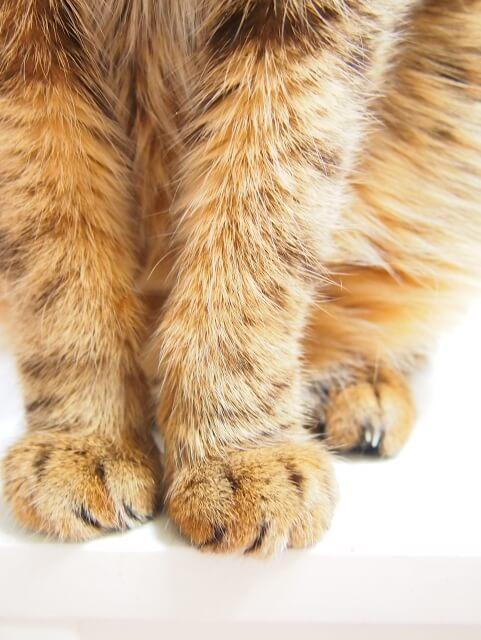 猫 利き手