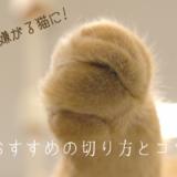 爪切り 嫌がる 猫 おすすめ 切り方 コツ