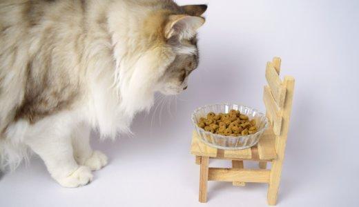 猫が餌を手からしか食べない・皿から食べないのはヒゲや高さが原因?おすすめの皿と餌のあげ方とは