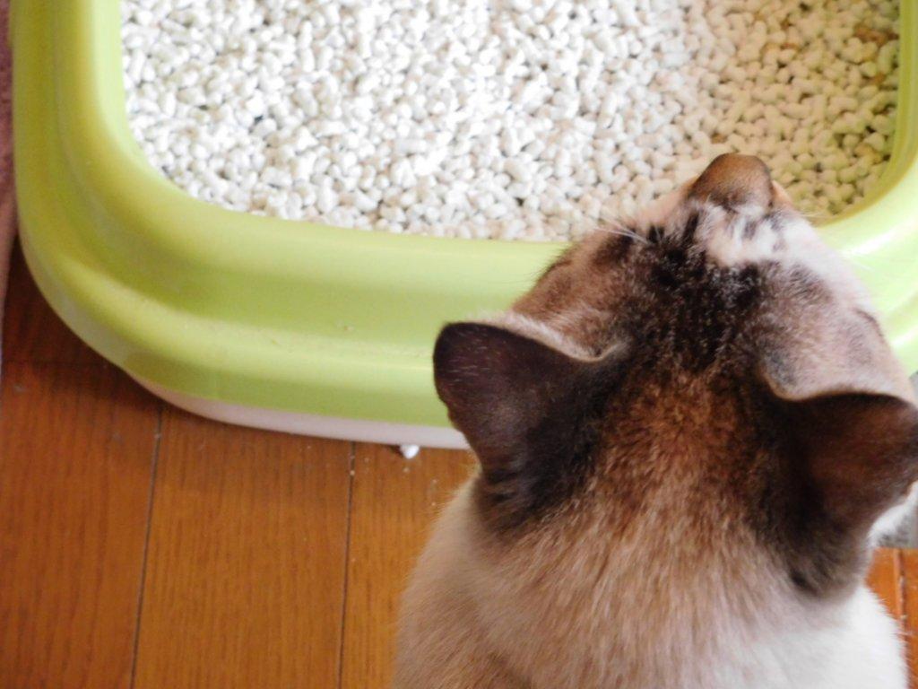 猫 膀胱炎 症状