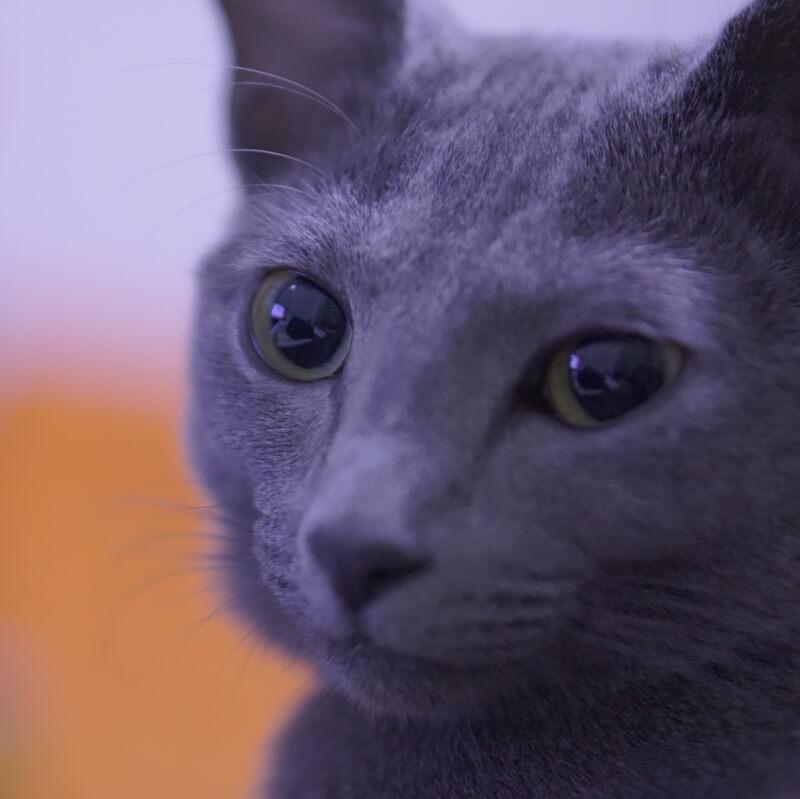猫 嘔吐 透明