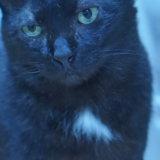 猫 黒猫 エンジェルマーク 福猫