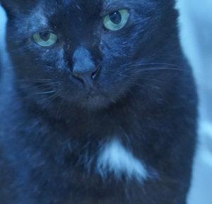 猫 黒猫 エンジェルマーク