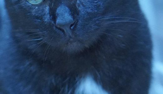 【願いが叶う!?】幸せの証♡黒猫のエンジェルマークと鍵しっぽとは