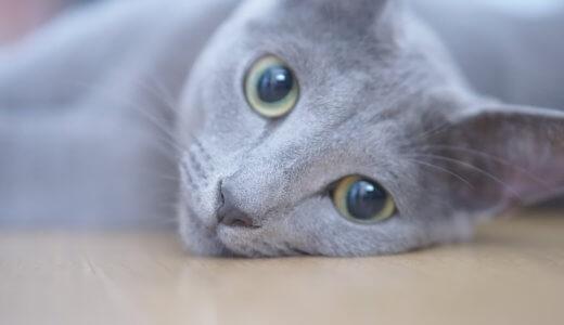 猫カフェ 猫 気付くのか メリット
