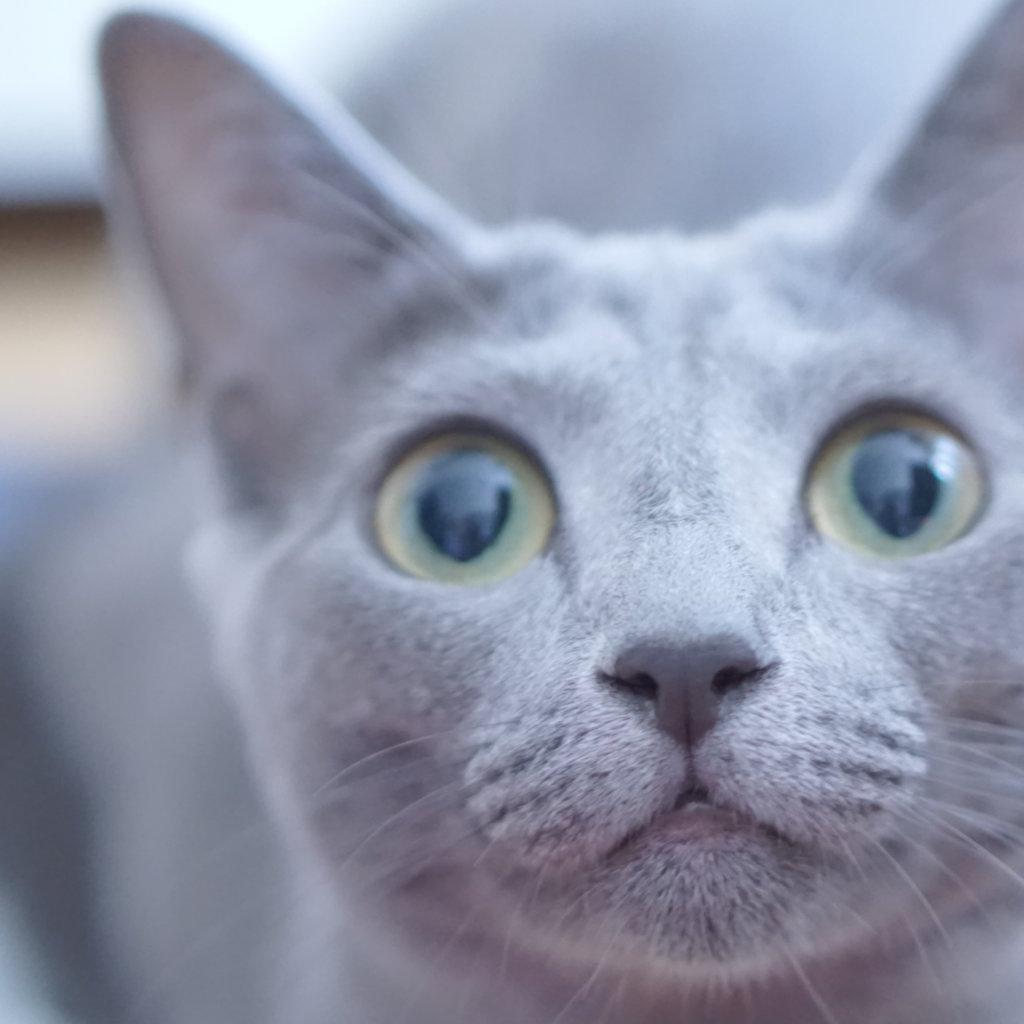 猫 ツンデレ