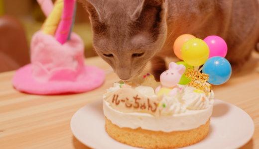 猫はバースデーケーキを食べない?予約・お取り寄せして人間が味見した結果