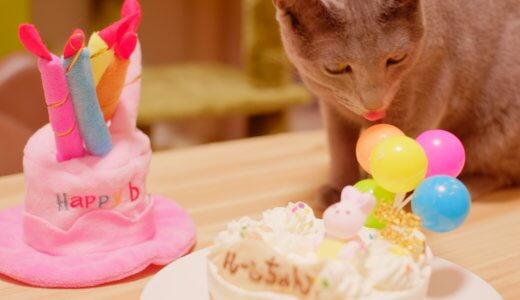 猫 バースデーケーキ