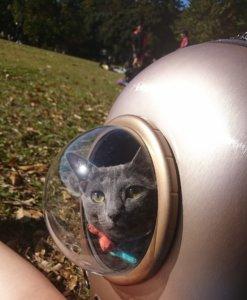 猫 キャリーバッグ