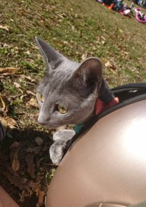 猫 宇宙船 キャリーバッグ
