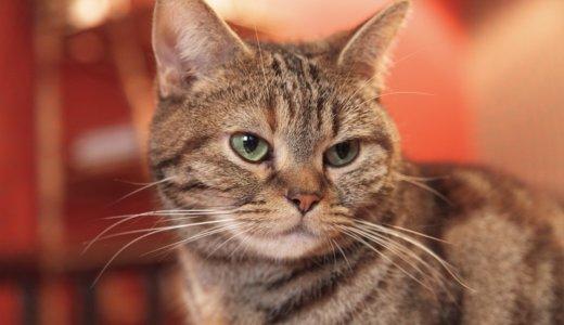 【残念ながらリピなし】うちの猫に泣けるほど人気なかったおやつ紹介