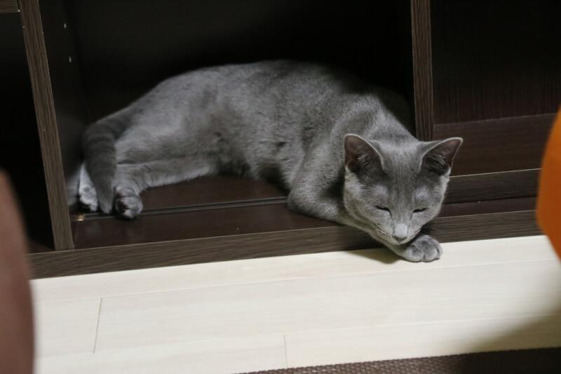 猫 狭いところ