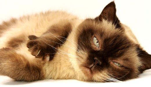 猫にハゲがある!原因は病気?足・背中・お腹・顔の部位別に解説!治療法も