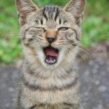 猫 歯 歯磨き