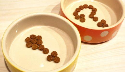 猫 ご飯 食べ方