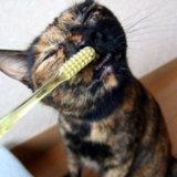 猫 歯磨き 効果あり