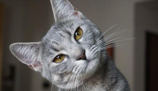 猫 おへそ ある