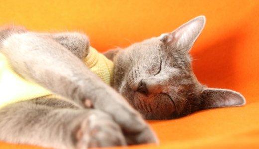 【体験談】猫の避妊手術はナゼ必要?費用は?期間は?何歳から?に答えます!