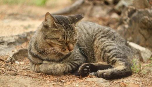 猫 肉球 キジトラ