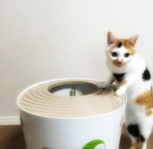 猫 トイレハイ 原因