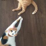 猫 トイレ ハイ