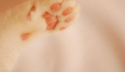 猫 肉球 色