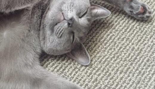 【脱・ガサガサ】猫の肉球はケア必須!コレでぷりぷり肉球を手に入れよう!