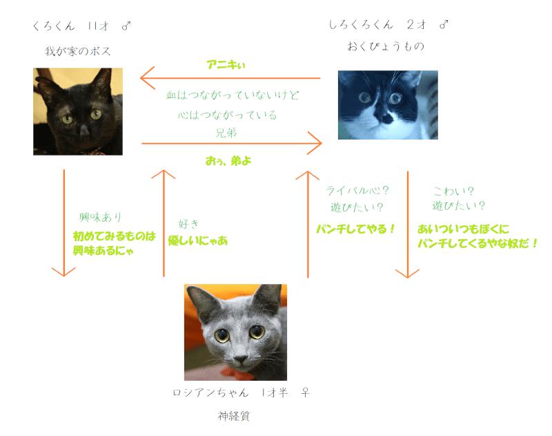 猫 関係図