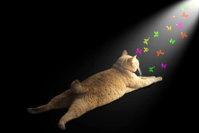 猫 しっぽ ボブテイル
