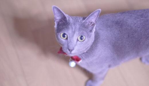 【プチ発見】うちの猫に某ファストフードを嗅がせたら予想外の仕草をとった件