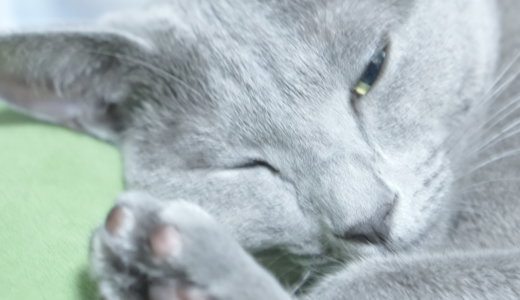 【最高の癒し】我が家の猫の可愛い寝顔写真を厳選してみた【10選】