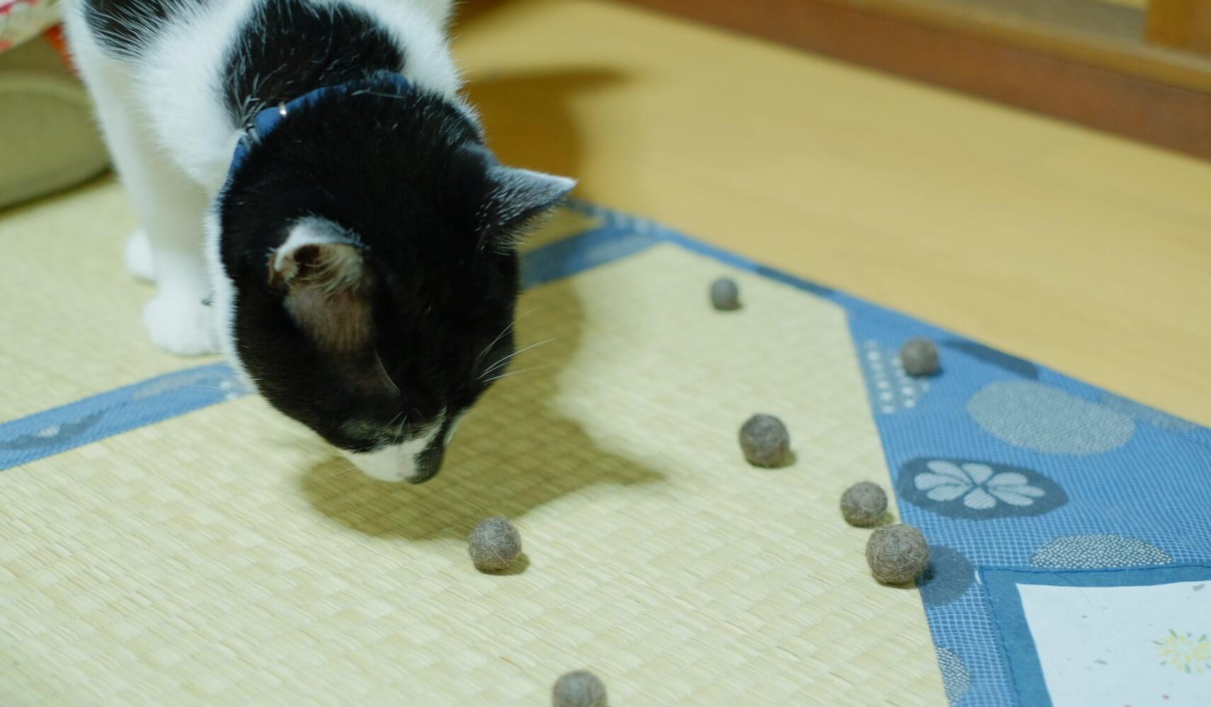 猫 猫毛フェルト