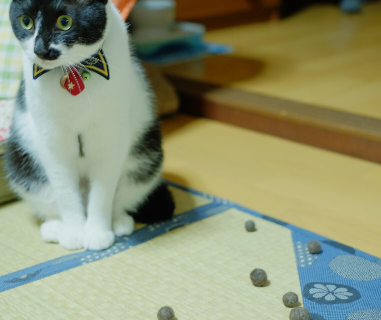 猫の毛 毛球症