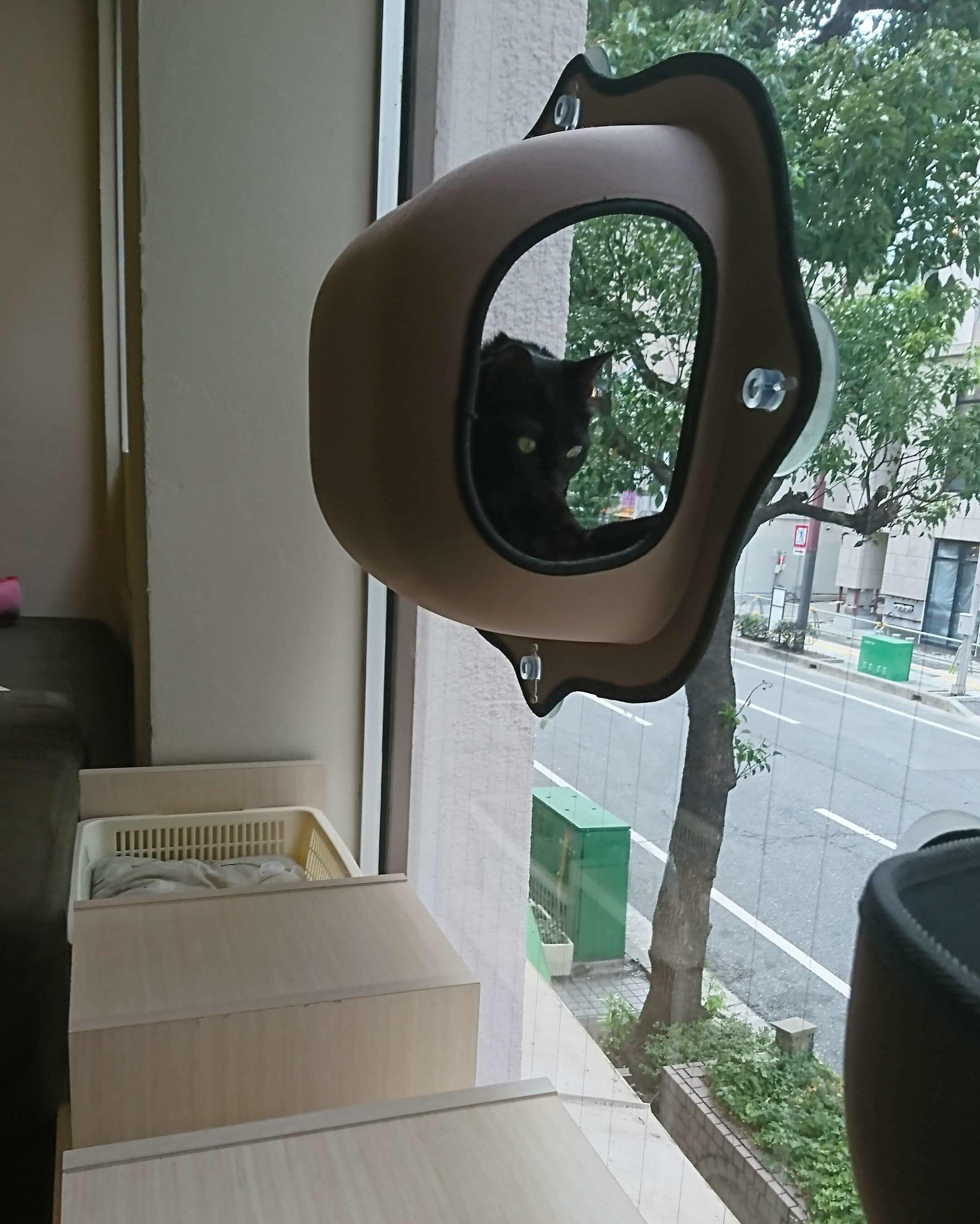 猫 黒猫専門 猫カフェ
