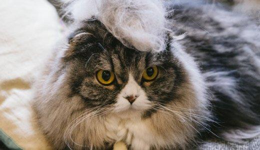 【飼い主必見】猫の抜け毛で猫毛ボールの作り方!猫毛フェルトで宝物を作ろう!